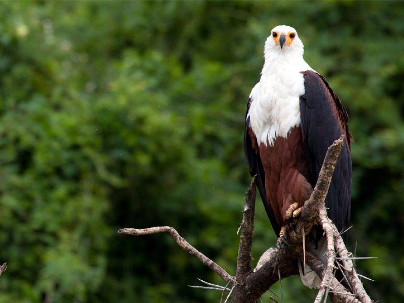 Image result for Elizabeth National Park